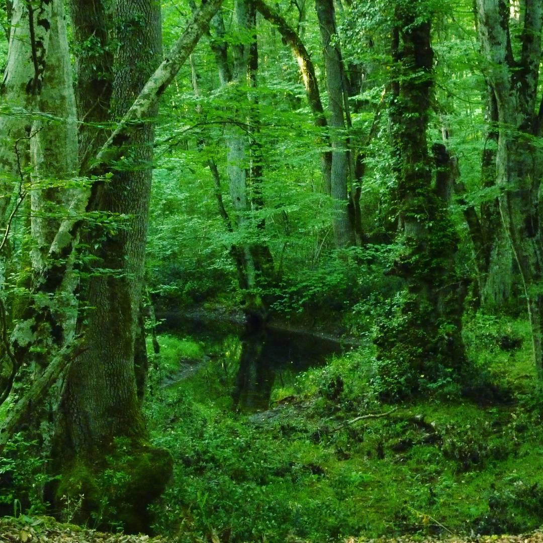 İğneada Longoz Ormanları Milli Park